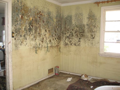 an interior wall of a house covered in mold